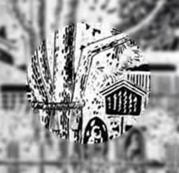 金沢 宝泉寺の御神木「五本松」