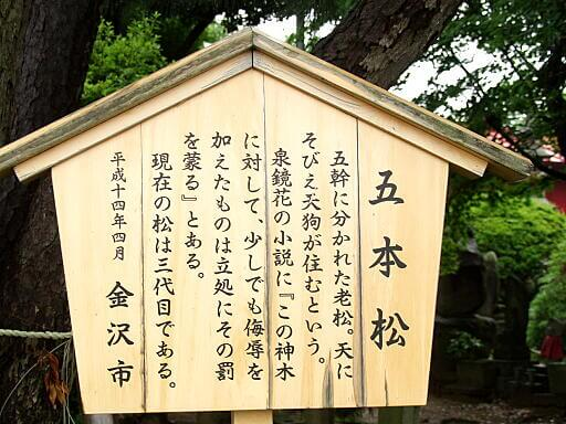 金沢市史跡五本松