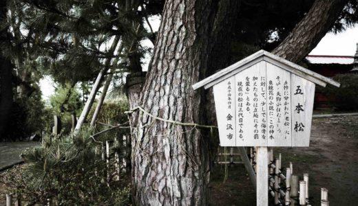 宝泉寺|御神木「五本松」