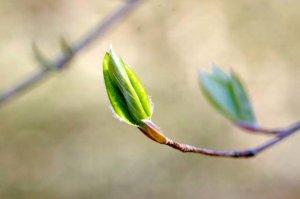 木の芽平成30年度「木の芽会総会・お花見会」のご案内