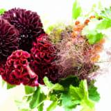 愛染王の花