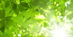 2019年7月21日|第48回木の芽会〈写経と法話の集い〉《満員御礼》