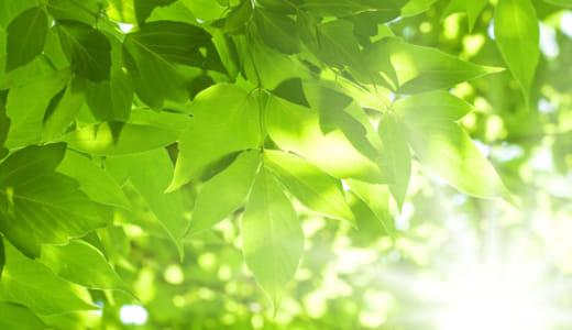 宝泉寺|第48回木の芽会〈写経と法話の集い〉2018年7月21日《満員御礼》