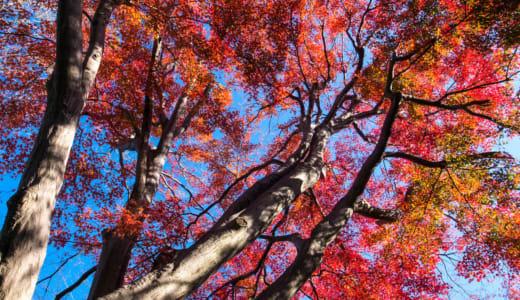 2019年12月8日(日) 第50回木の芽会「報恩行と楽しい昼食会」のご案内