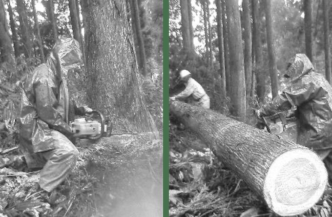 年初めの甲子(きのえね)の日に護摩木を伐る