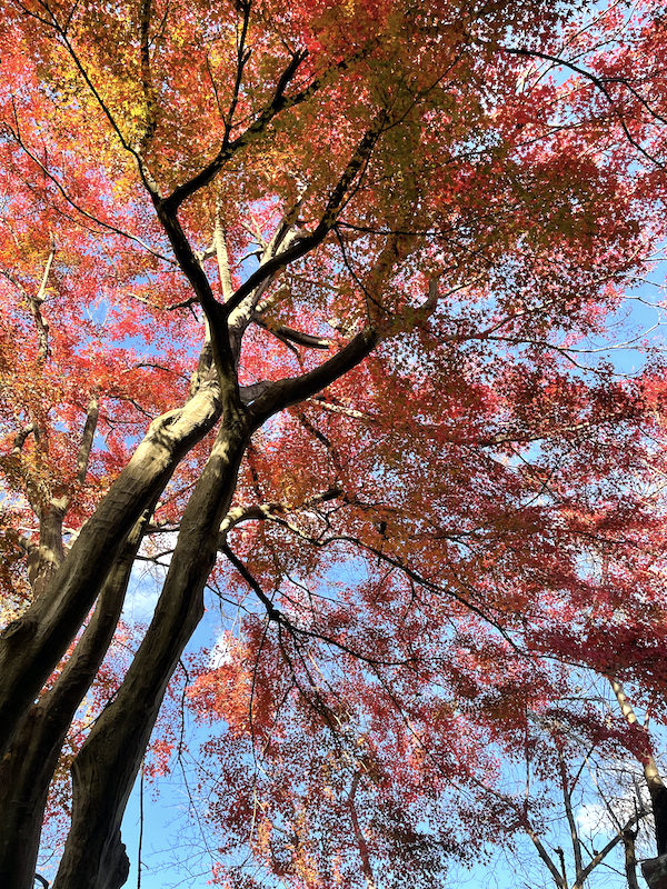 第51回木の芽会〈おかげさま報恩行〉おかげさまでありがとうございます。
