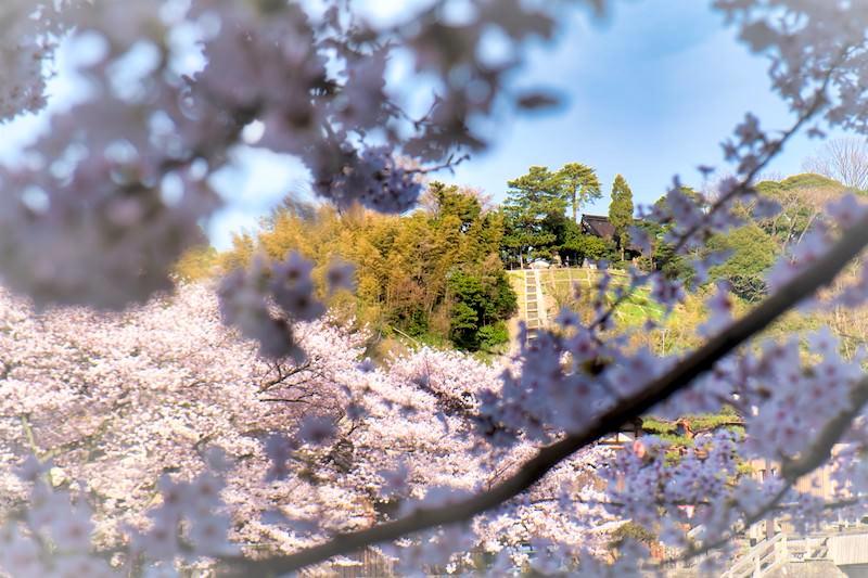 浅野川からみた宝泉寺(金沢市米沢啓さん撮影)